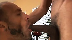 Bearded white guy gives his hung black lover a great blowjob
