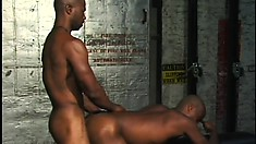 Horny black lovers engage in hardcore anal action in the basement